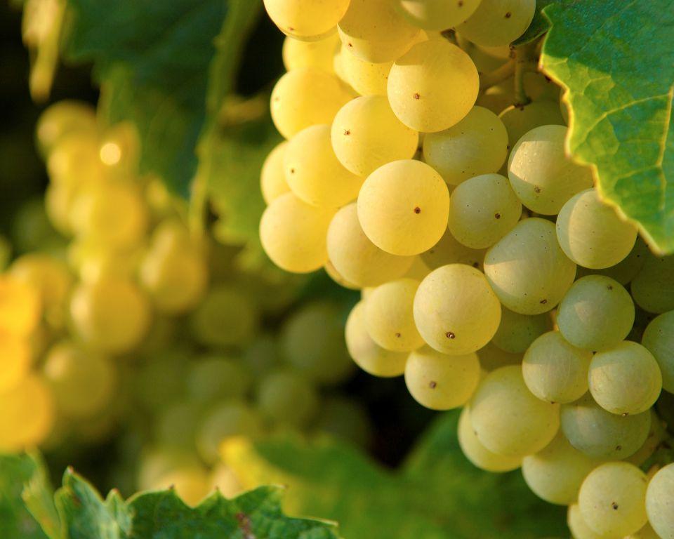 La  Maison  Martell  et  la  Maison  Familiale  Rurale  de  Triac-Lautrait  s'engagent aux  côtés  des viticulteurs de l'AOC Cognac pour proposer une formation pratique dans les métiers de la vigne.